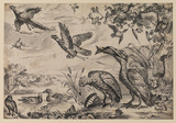 Gathering of birds of different species (engraving by Griffier)