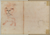 Head of a lion (verso)