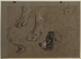 Head of a dog and five studies of legs and paws (recto)