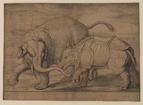 Fight between an elephant and rhinoceros