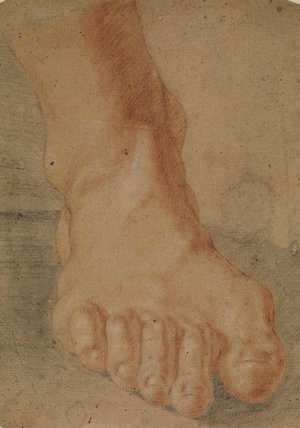 Study of a right foot