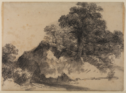 Landscape, with trees and a bank