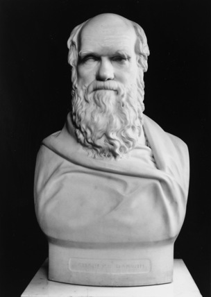 Bust of Charles Darwin
