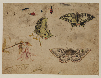 Study of insects, three butterflies and flowers