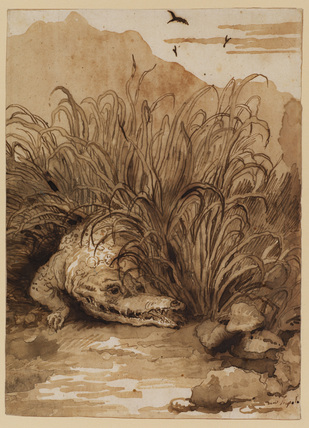 Crocodile emerging from the rushes towards the water's edge