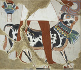 Copy of wall painting from private tomb 226, Thebes (I, 1, 327), festal bull
