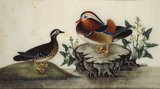 Two mandarin ducks and flowering water plants by a pond