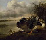A Pair of Ducks in a Landscape, 1659