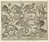 Ostrich on left side with nine other birds, including a heron and a pelican, depicted on a minimal ground with patches of foliage around some of the birds, from Douce Ornament Prints Album I
