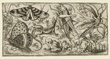 Group of insects and animals on a plain ground with grass, including a butterfly, a dragonfly, a moth, a cricket, a lizard, a frog, and a snail, from Douce Ornament Prints Album I
