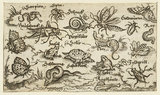 Insects, reptiles, snails, and fish on minimal ground with water in foreground, animals include a snake, turtle, cricket, frog, bee, scorpion, and caterpillar, from Douce Ornament Prints Album I