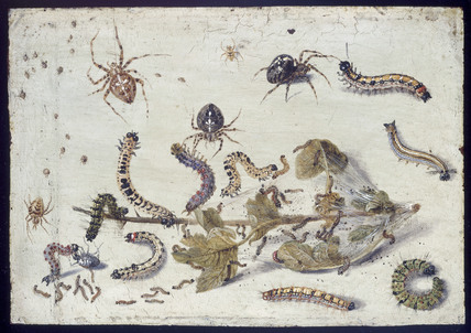 Various Spiders and Caterpillars, with a Sprig of Gooseberry
