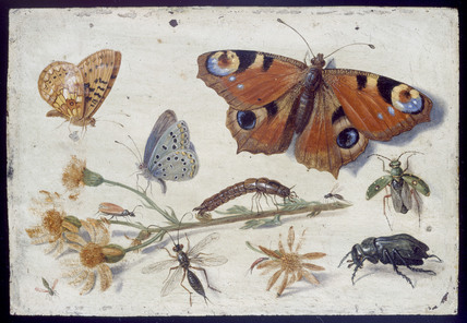 Three Butterfiles, a Beetle and other Insects, with a Cutting of Ragwort