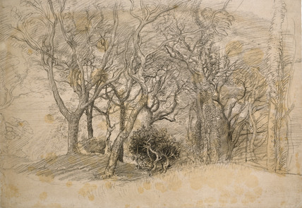 Study of Trees, Clovelly Park