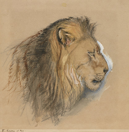A Lion's Profile, from life