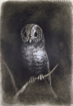 Owl in Mantegna's Fresco of the Martyrdom of St James
