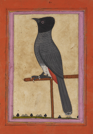 A bird on a perch