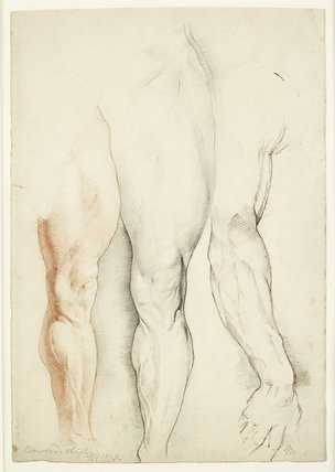 'Boswood's Thigh' and the right arm of Michelangelo's 'David'