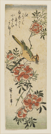 Woodpecker on peony spray