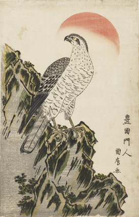 An eagle standing on a rocky ridge; red sun.