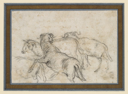 Study of Four Sheep