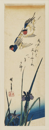 Two swallows flying over irises; yellow edging