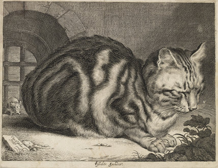 The Large Cat, c. 1657