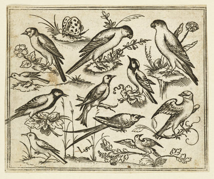 Eleven birds and two insects on minimal ground with owl with wings outstretched sitting on a branch in centre with other birds surrounding and teasing owl, from Douce Ornament Prints Album I