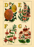 D for Dahlia, E for Erica, F for Fuschia, G for Geranium