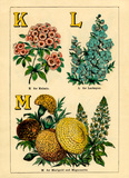 K for Kalmia, L for Larkspur, M for Marigold and Mignonette.