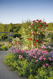 The Shrub Rose Garden in summer at RHS Garden Rosemoor.