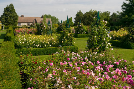 The Modern Rose Garden at Hyde Hall