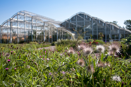 Wisley glasshouse and the Hitchmough Meadow