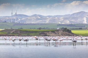 One of the most notable sights in Larnaca is Larnaca Salt Lake