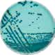 medios-de-cultivo-cromogenicos-oxoid