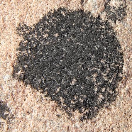 Hydropunctaria maura