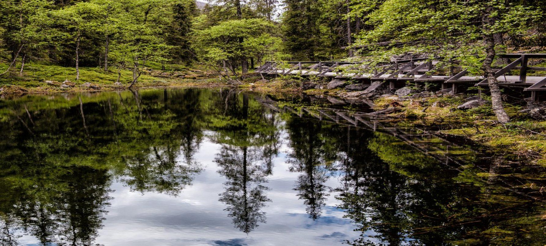 Vieraile naapuritunturissa Pyhällä - Isokuru-Pyhä-Luosto kansallispuisto