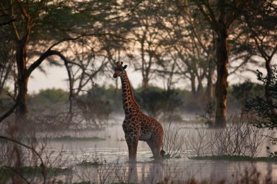 Love Home Swap African villa includes wildlife like giraffes