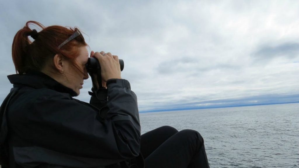 Whale Watching in Quebec