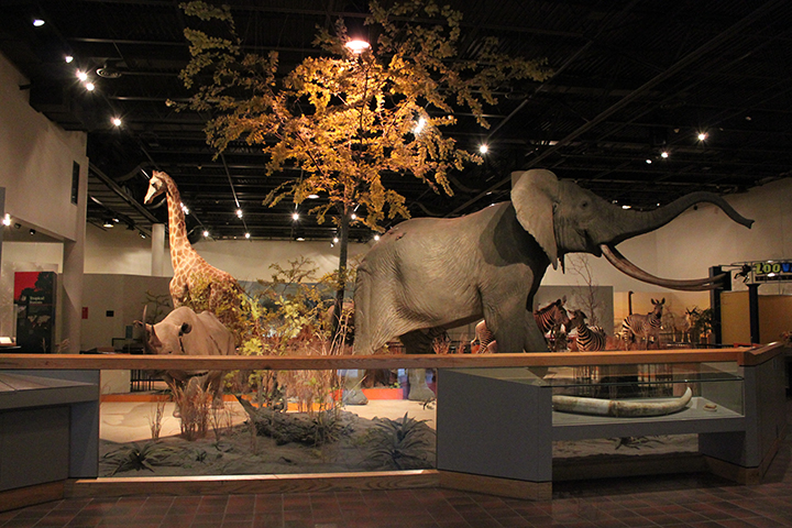 The Top Things To Do in Sioux Falls Great Plains Zoo and the Delbridge Museum of Natural History