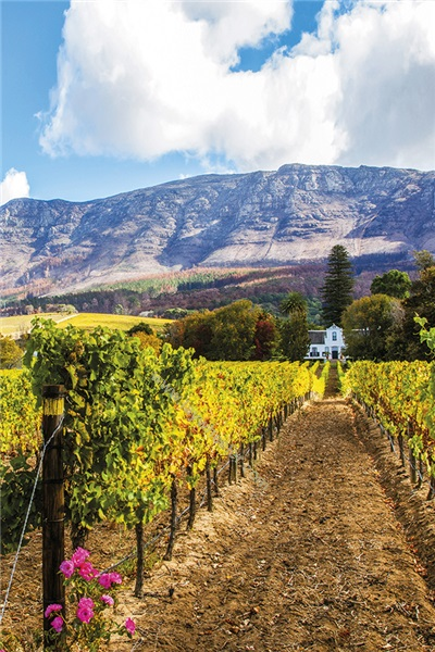 South Africa Growers' Tasting on Wednesday 4th Sept 2019 at Glaziers Hall