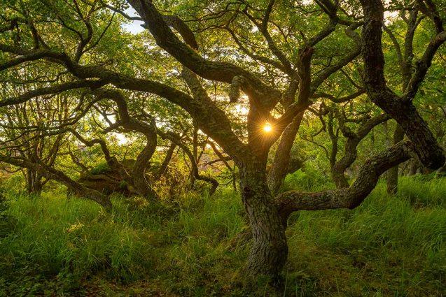 Auringonnousu saaristossa, Elmeri Juuti