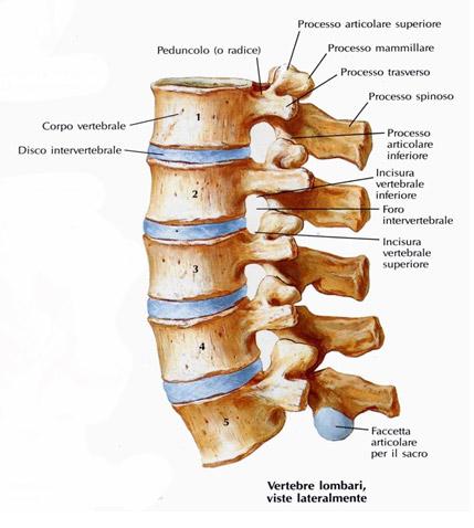 I danni posteriori che possono aiutare