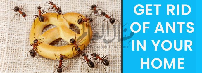 3 طرق طبيعية وسهلة للتخلص من النمل في البيت - المشاهدات : 12.3K