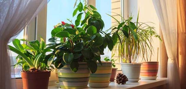 تعرف على.. أفضل النباتات المنزلية لتنقية هواء البيت - المشاهدات : 3.99K