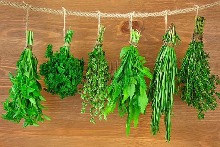 حافظي على الأعشاب الخضراء طازجة لفترة طويلة