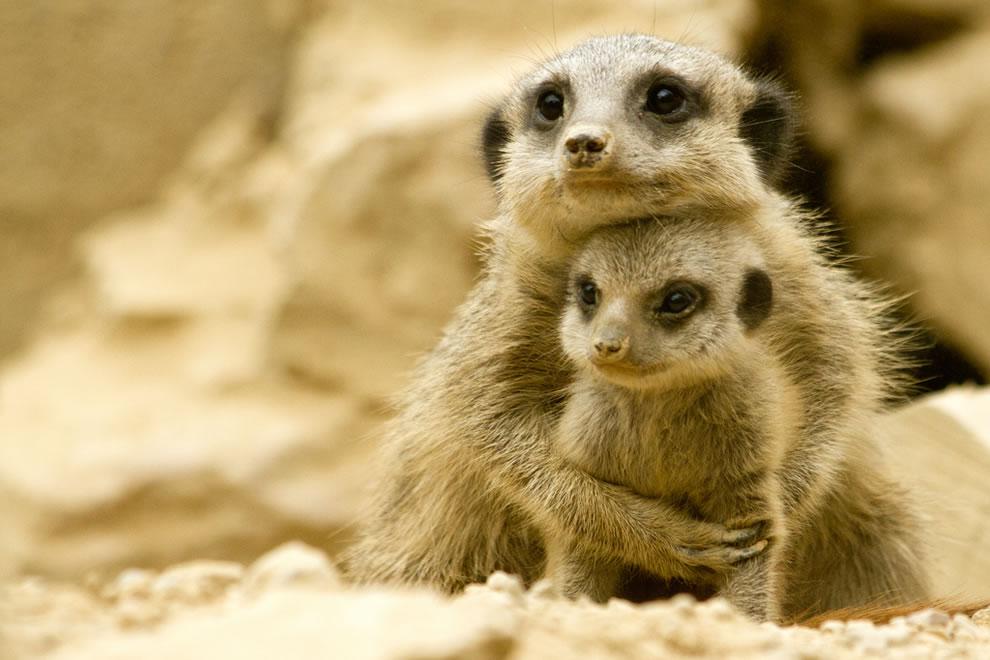 لن تصدق! الأمومة عند الحيوان… أكثر من غريزة