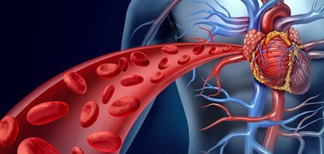 3 أطعمة تعمل على تنشيط الدورة الدموية - المشاهدات : 1.53K
