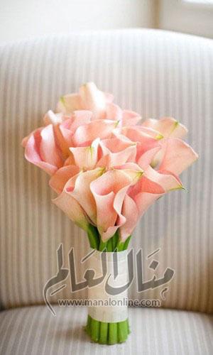 ياجمال الورد! وخاصةً إن كان ورد العروس-3