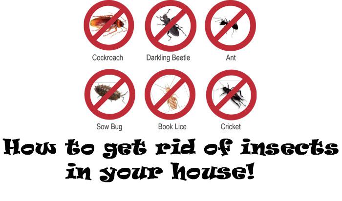 طرق بسيطة لتخلص من الحشرات فى منزلك - المشاهدات : 423